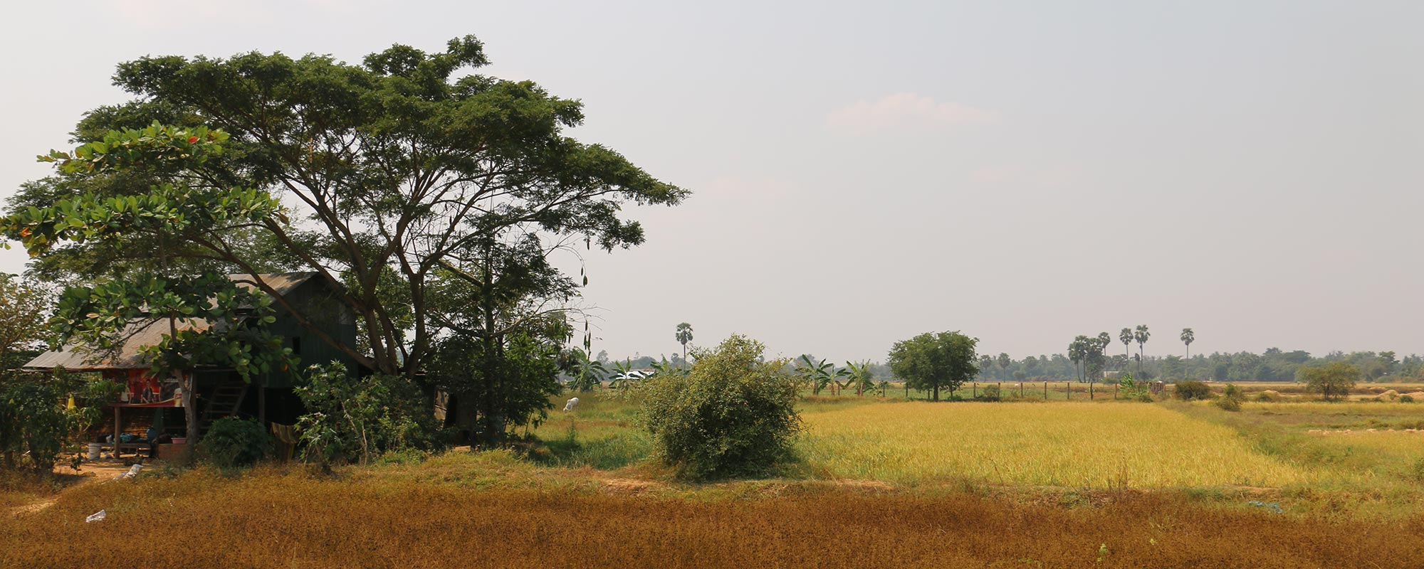 Explore Battambang Countryside